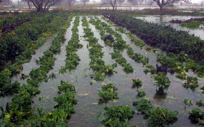 Αποζημιώνονται αύριο οι αγρότες από τον ΕΛΓΑ